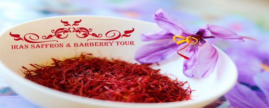 saffron-barberry-tour